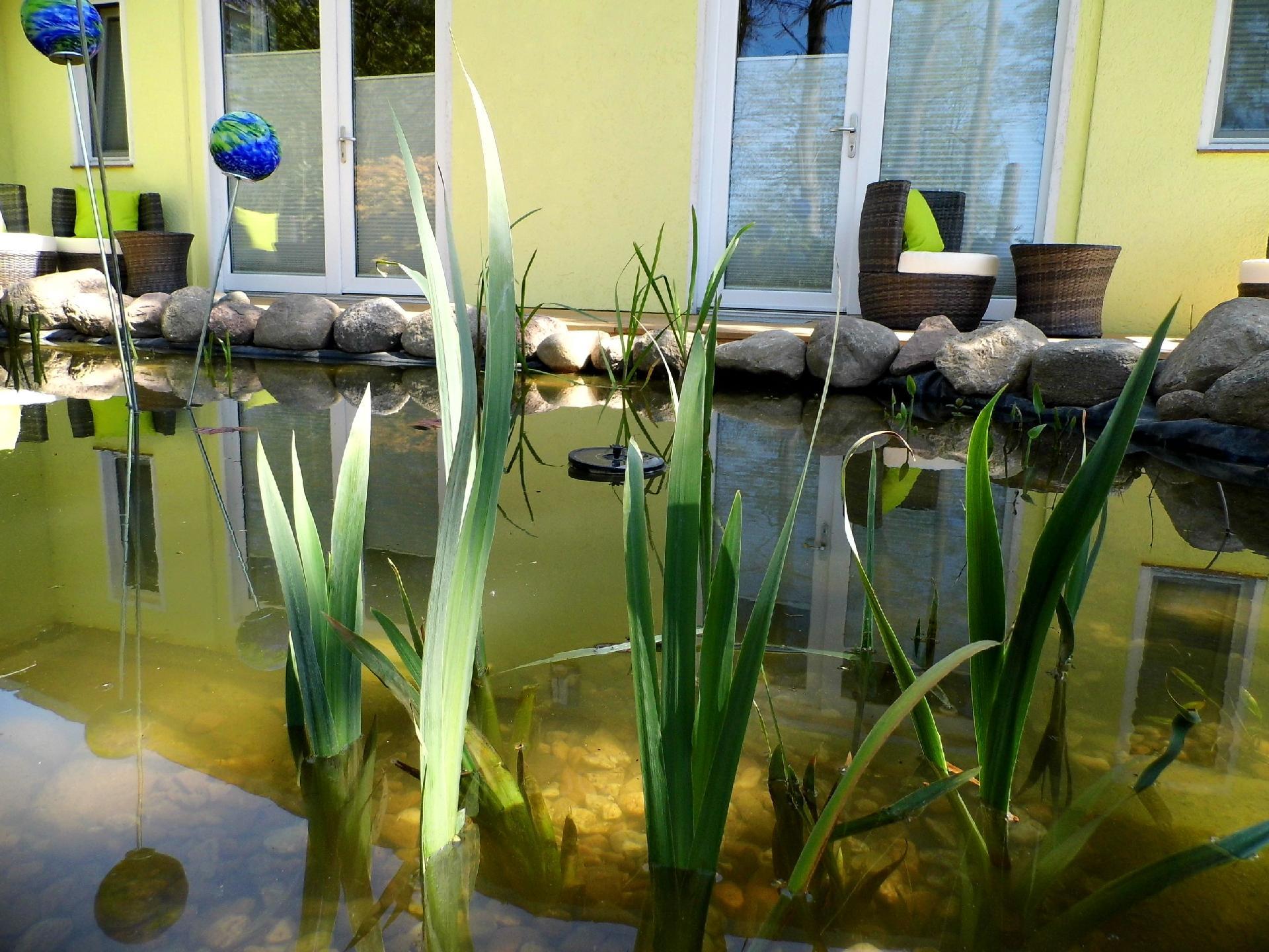 Ferienwohnung für 2 Personen ca. 40 m² i  auf Usedom